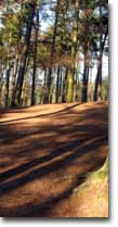 A track trhough Delamere Forest